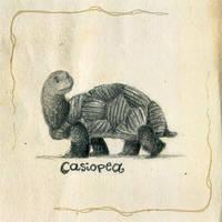 casiopea by sakuanita