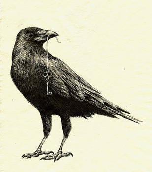 Crow by Kaelycea