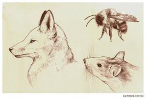 Sketchbook Work by Kaelycea