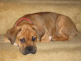 OMG I got a puppy by wastedsacrifice