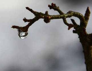 Winter in a Droplet by sapphiresphinx