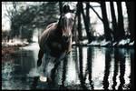 Cold River Run by xxtgxxstock