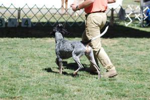 Bluetick Coonhound 12 by xxtgxxstock