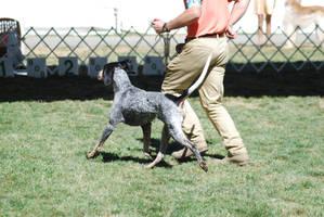 Bluetick Coonhound 13 by xxtgxxstock
