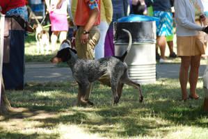 Bluetick Coonhound 14 by xxtgxxstock