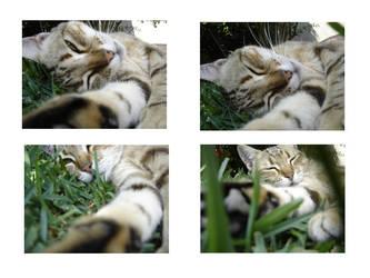 cat's by BL00DG0D