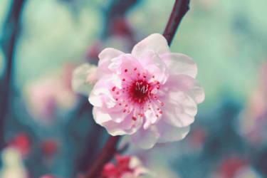 les fleur. by lisz