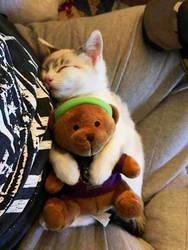 cat and bear stuffed by himeogi