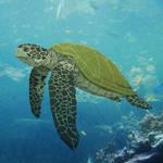 Wild Wednesday - Sea Turtle by KahunaBlair