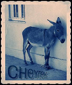 cheyrek's Profile Picture