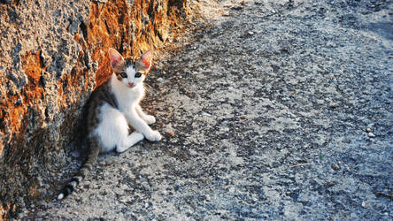 Sunset Kitten by cheyrek