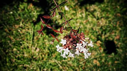 Flowers by cheyrek