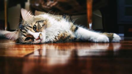 Lying Cat Wallpaper by cheyrek