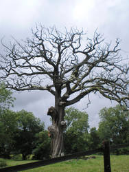 Old tree by Saiisuke