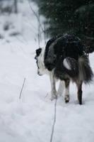 Winter by CPT-Elizaye