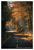 Autumn Road by Vipallica