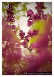 Nature's Awakening by Vipallica