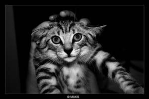 cat by MaksDiamond