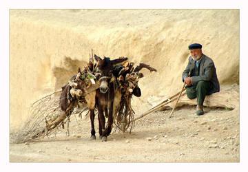 five legged donkey... by salihguler