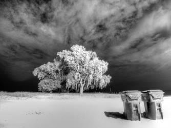 Black and White Night 7 by lightzone