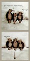 birds by szucsi