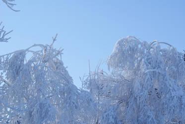 Snow 7 by dark-silva