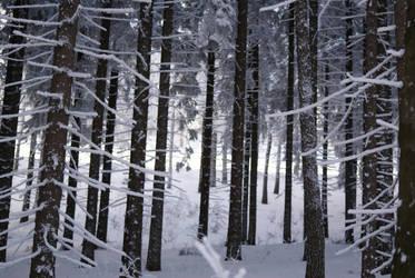 Snow 11 by dark-silva