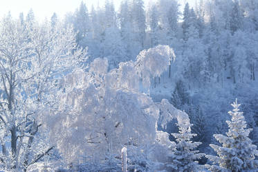 Snow 14 by dark-silva