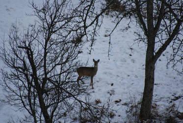 doe in the snow by dark-silva