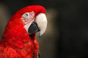 Bird by par-a-bola