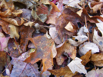 Fall leaves - Stock by XcentrikVeronik