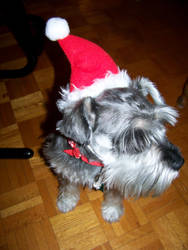 Christmas Dog by XcentrikVeronik