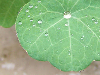 Macro leaf by XcentrikVeronik