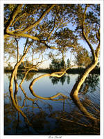 Mirrored Curves by engridearty