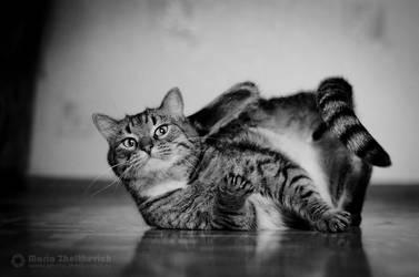cat breakdance by Zheltkevich