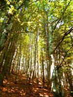 Forest by PurebloodRose