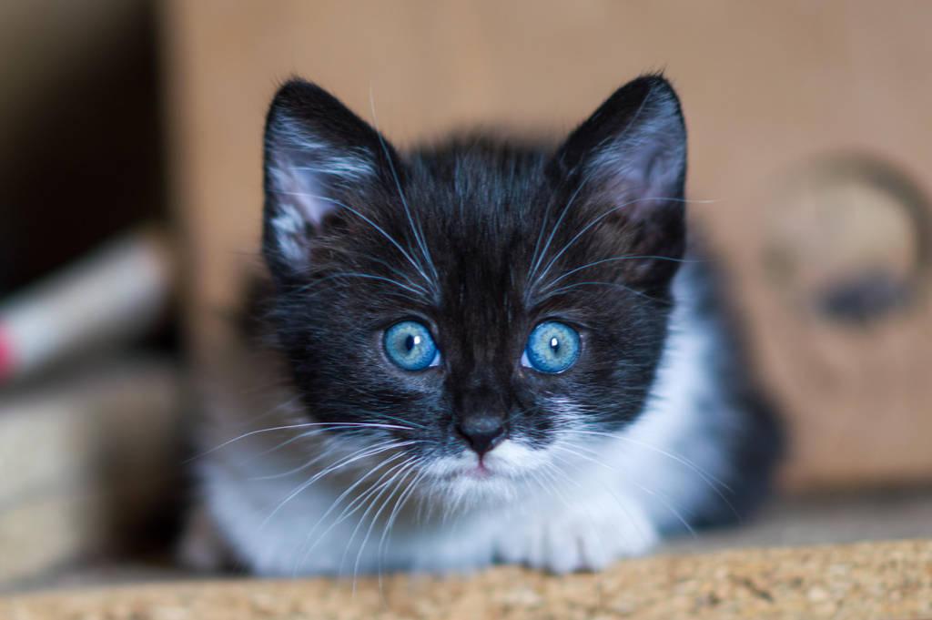 Blue eyes by PurebloodRose