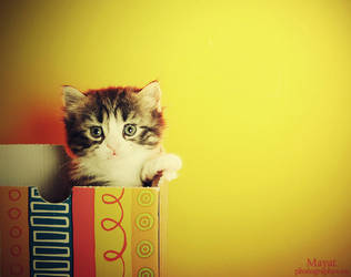 cute look Kitten 1-3 by mayat-s