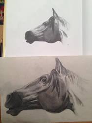 Horse Head by AngelGabryel