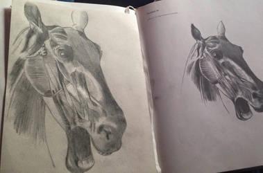 Horsehead anatomy homework by AngelGabryel