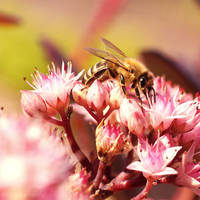 Bee by akibara