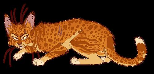 Leopardstar by sorrelpaaws