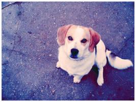 Dog by LenkeM