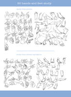 [How to] 50 Hands and feet study by aoiMusubi