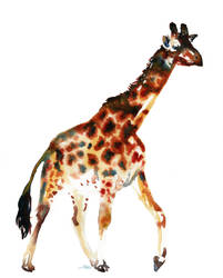 Giraffe by SALTWatercolors