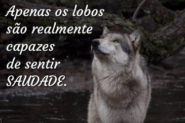 Mem  Only wolves by CachorroSenhorTorrao