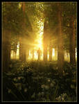 Into The Light by 00AngelicDevil00