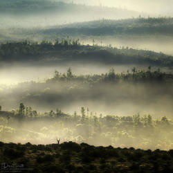 Another Foggy Morning by 00AngelicDevil00