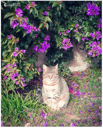 Posing Cat by Gaston3-italia