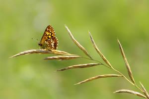 Lepidoptera X by Nazareanu